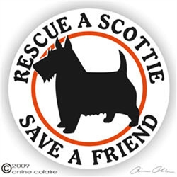Norwich Terriers on Board Dog Sign Decal Terrier Art V02 Car Window Sticker